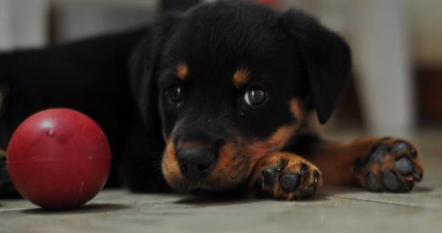 Los juguetes blandos son los mejores para los afilados dientes de tu cachorro.